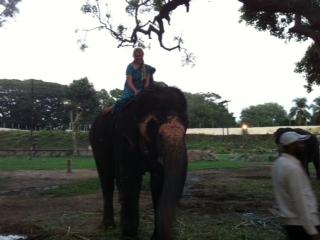 4-mysore-auf-einem-elefanten-des-maharadschas-sitzes.JPG