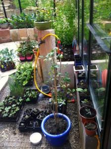 Aufzucht neuer Pflanzen