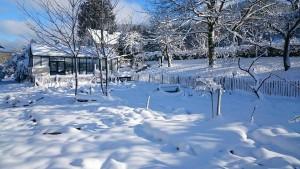 Garten 1.1.2015