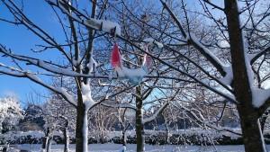 Gebetsfahnen im Schnee