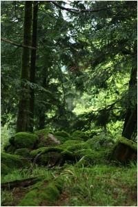Wald bei der Abfahrt 2