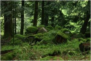Wald bei der Abfahrt