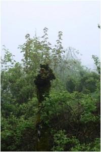 Wesen des Waldes