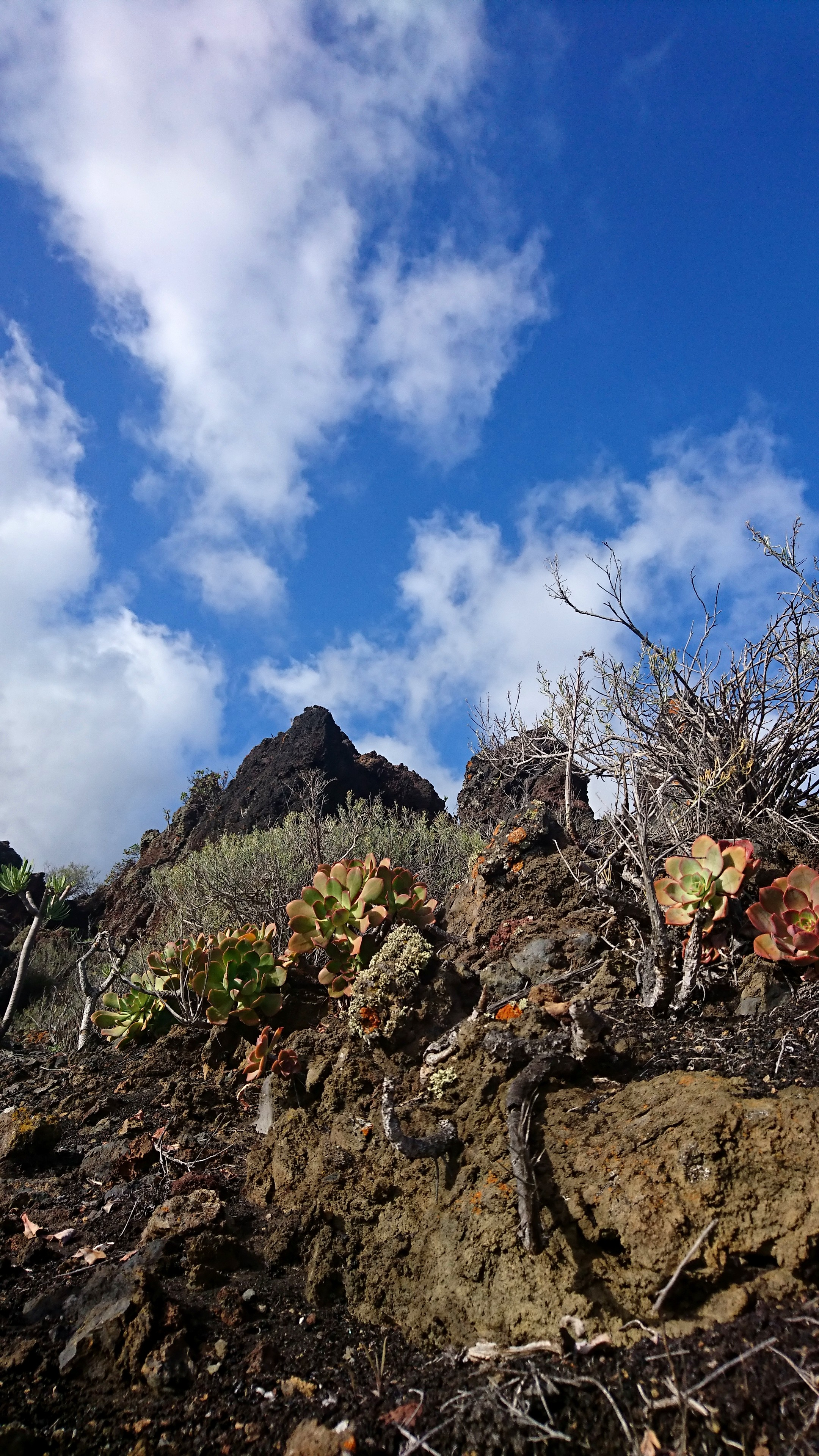 Im Vulkangebiet beim Teneguia